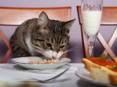 стерилизованным кошкам нужна особая диета