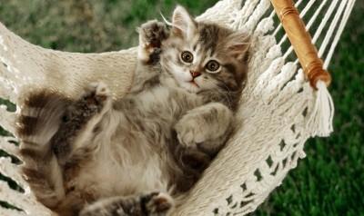 вес котёнка может рассказать о его возрасте