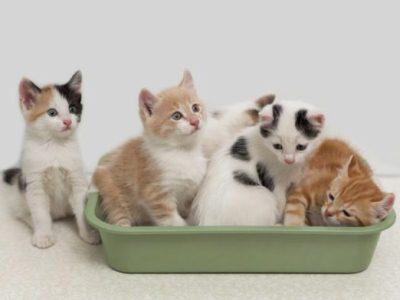 далеко не все кошки готовы делиться своими вещами