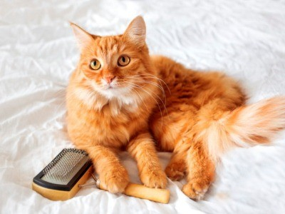 кошка может подцепить клещей с чужой расчёски