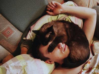 ложась на человека, кошки показывают свою любовь и заботу