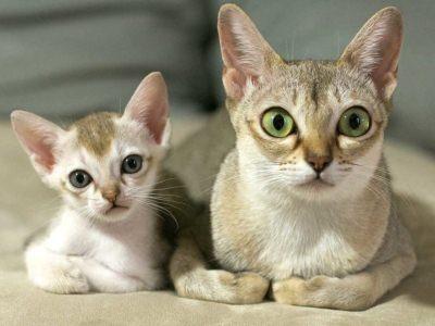 глазки у котят хорошо показывают возраст