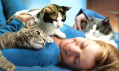 мурчание кошки благотворно влияет на организм