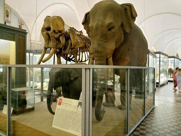 Санкт-Петербург. Экспонаты Зоологического музея