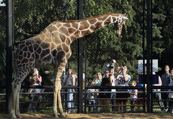 В столичном зоопарке