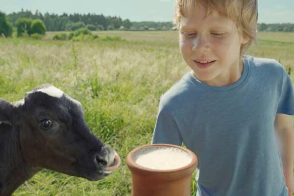 Деревенское молоко опасно без кипячения