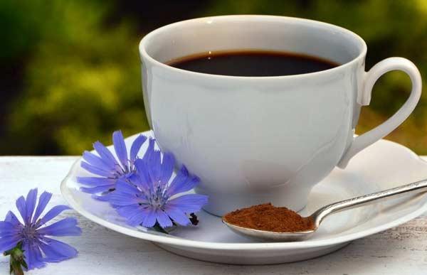 Напиток из цикория — замена натуральному кофе