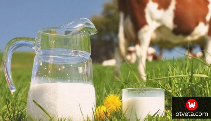 Стоит ли пить молоко